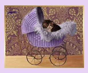 wicker baby carriage with grey and white Persian kitten